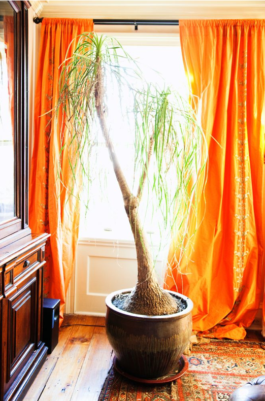 Warm Curtains and Plant